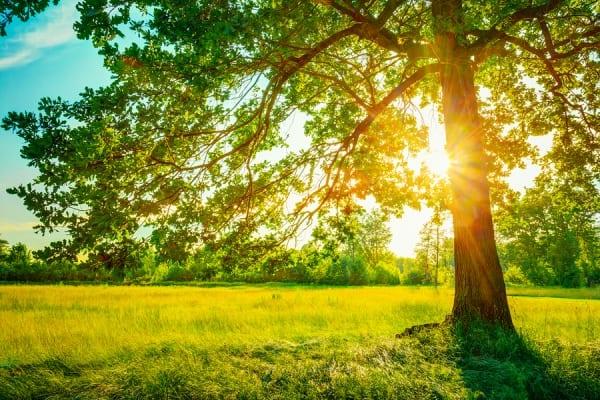 natuur en licht